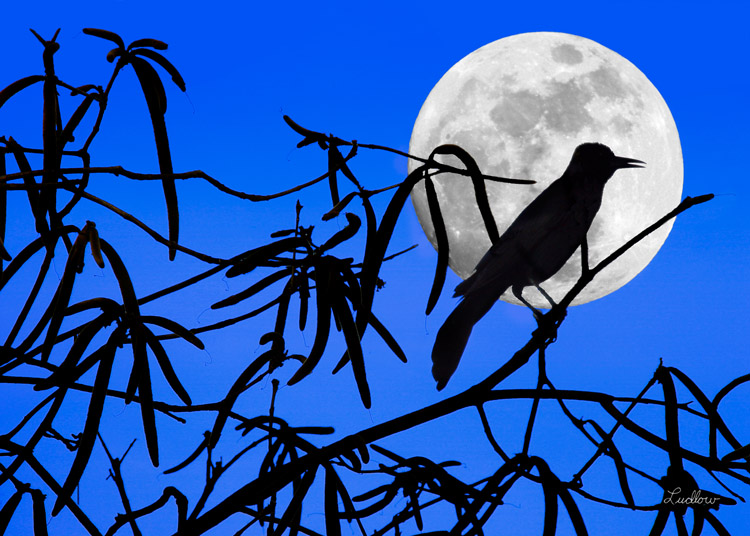 Moontage