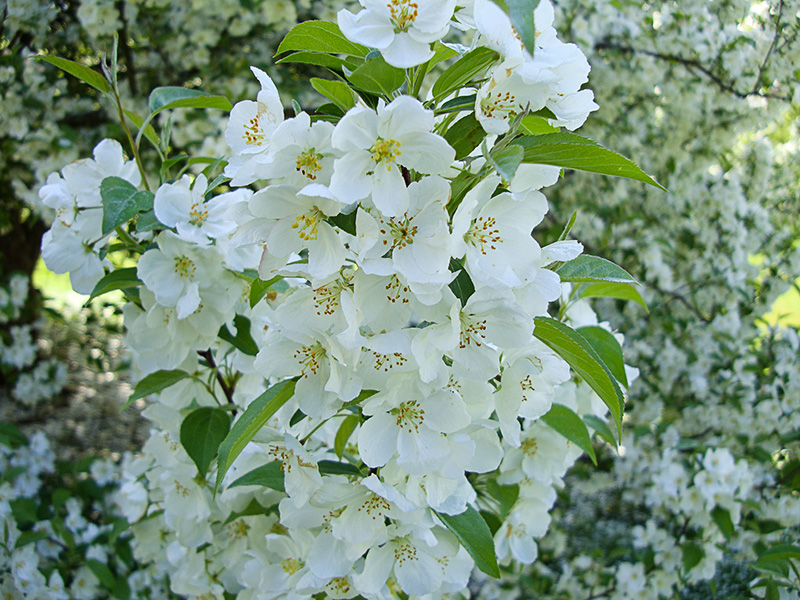 Flowering trees follow up photothemes blog white flowers mightylinksfo